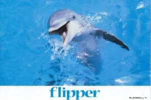 flipper_3